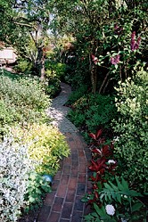 Overgrown garden path
